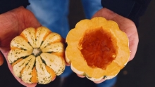 The Market Review - Assorted Hard Squash