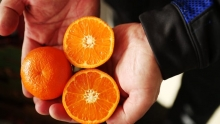 The Market Review - Red Seedless Muscat Grapes & Organic Murcott Mandarins