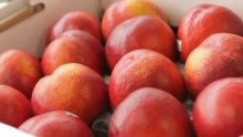 The Market Review - Sweet2Eat Nectarines & Manila Mangoes