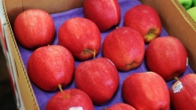 The Market Review - Late Fall Apples