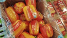 The Market Review - Aloha Peppers & Campari Tomatoes