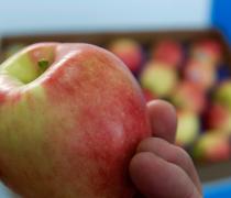 Produce, Fruit, apple, shasta, organic, ambrosia, Delicious, healthy