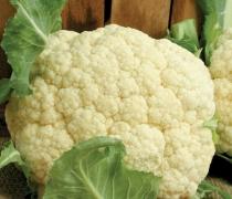 Foxy Organic Cauliflower