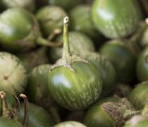 Green Thai Eggplant