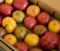 Organic Heirloom tomatoes wide