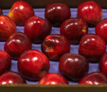 fancy, jonathan, apple, shasta, produce, fruit, fall, season, shiny, pretty, beautiful, healthy, small, san francisco, California, nature, diet