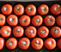 Case of Beefsteak Tomatoes