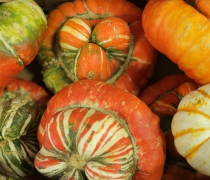 Multi Color Turban Squash