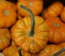 Tiny Pumpkins