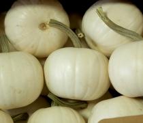 White Pie Pumpkins!