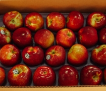 Macoun Red Apples