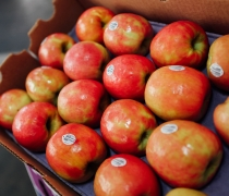 Case of Pink Lady Apples