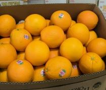 Organic Cara Cara Oranges