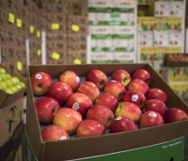 Pink Lady Organic Apples