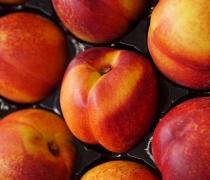 Close Up Organic Nectarines