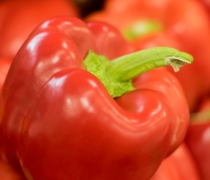 Green, pepper, bell pepper, fruit, shasta, produce, agriculture, horticulture, wholesale, red