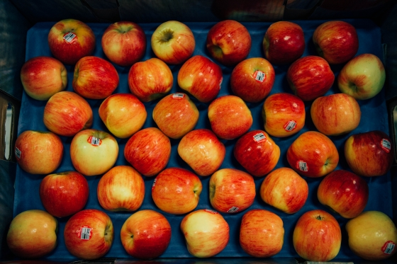 Autumn Glory Apples displayed in their case