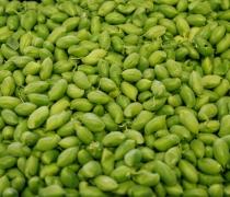 Green Garbanzo Beans
